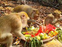 งานบุญพาข้าวลิง