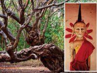 พระไม้ล้ำค่า ต้นจำปีพันปี